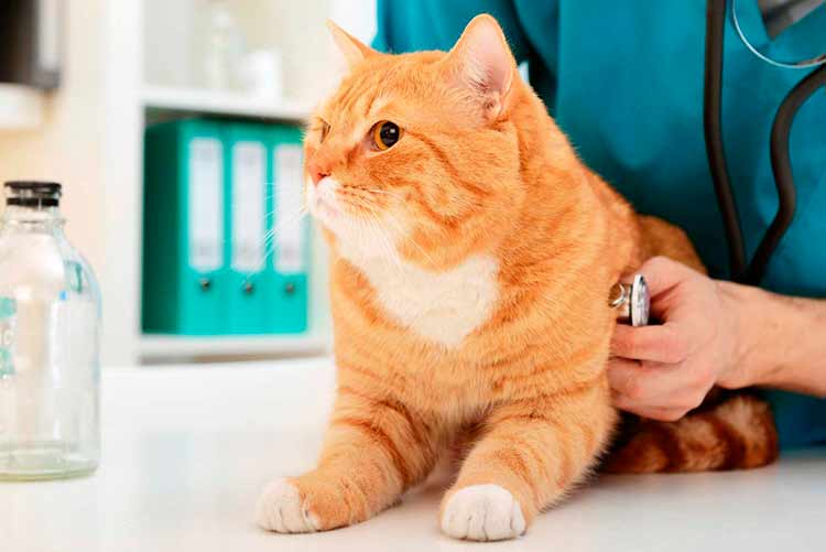 Какая информация может помочь ветеринару определить причину судорог у кошки?