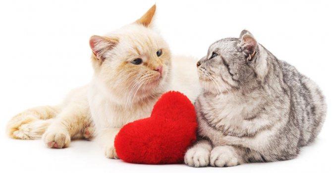 Какая норма частоты пульса у кошек