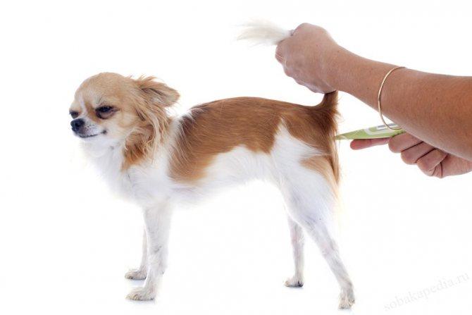 Какая нормальная температура у собак