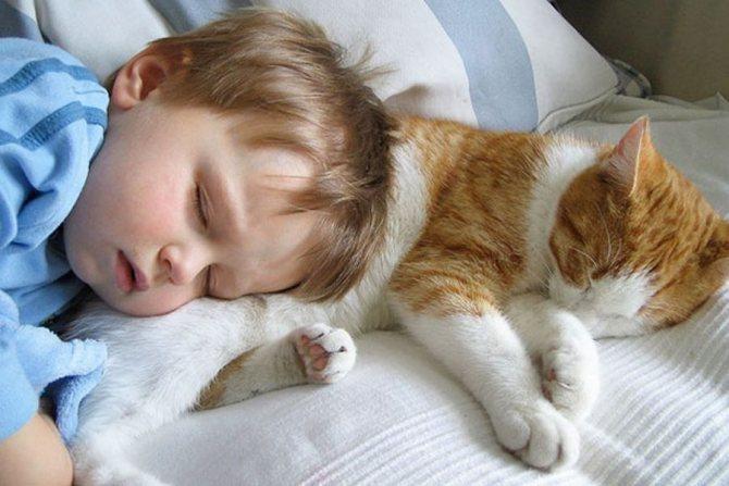 Какая польза кошек для человека