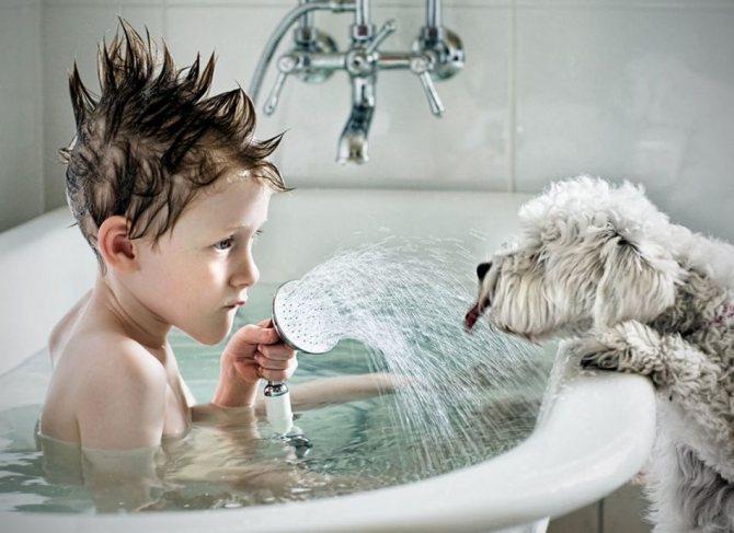 Какая вода подойдет для питья собаке?