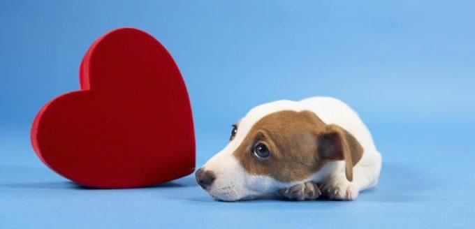 какие есть болезни сердца у собак