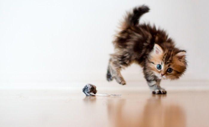 Какие игры любят котятки?, фото № 6