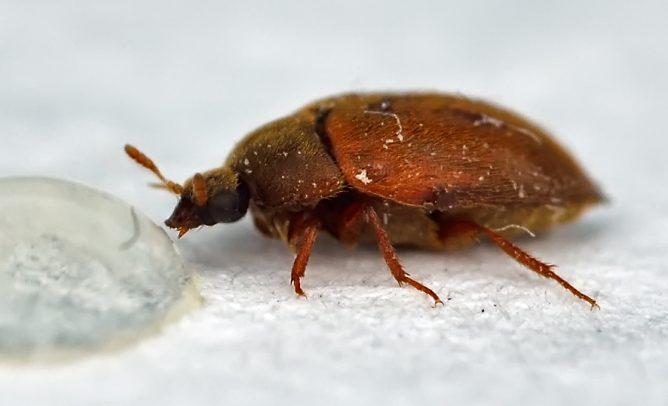 Какие насекомые могут завестись в квартире — фото и названия