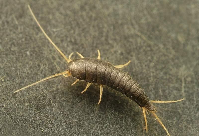 Какие насекомые могут завестись в ванной