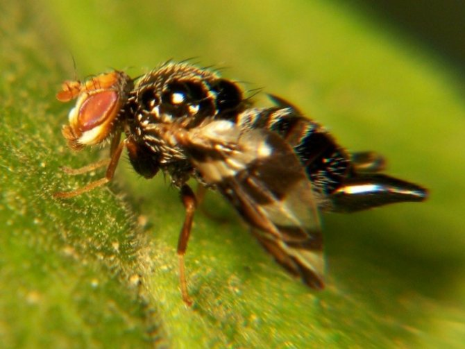 Какие насекомые самые маленькие