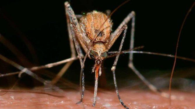 Какие насекомые смертельно опасные для человека — список, фото и описания
