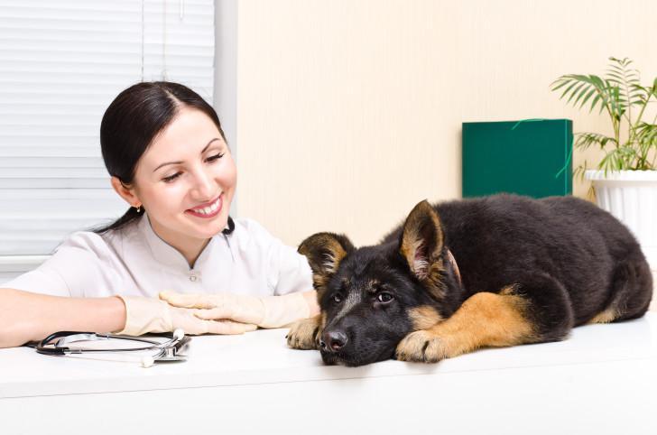 Какие прививки делают щенкам немецкой овчарки