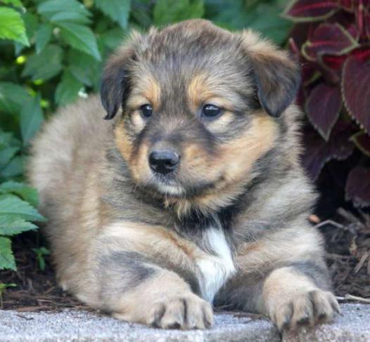 какие прививки делают щенкам