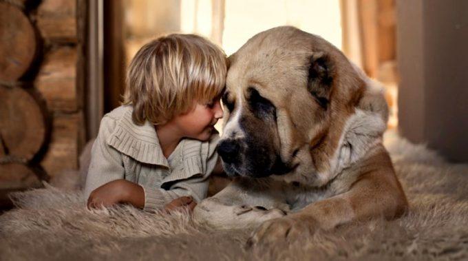какие профилактические действия против заразных заболеваниях у собак