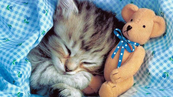 Какие сны снятся кошкам