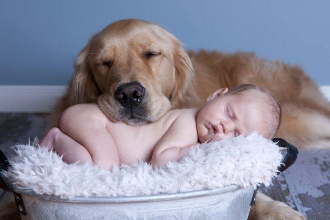 Какие собаки подойдут аллергикам? ТОП – 10 гипоаллергенных пород: Обзор Видео