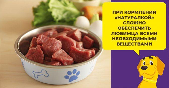 Какие витамины нужны собаке для красивой и здоровой шерсти