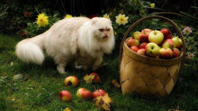 какие витамины выбрать для кошек от выпадения шерсти