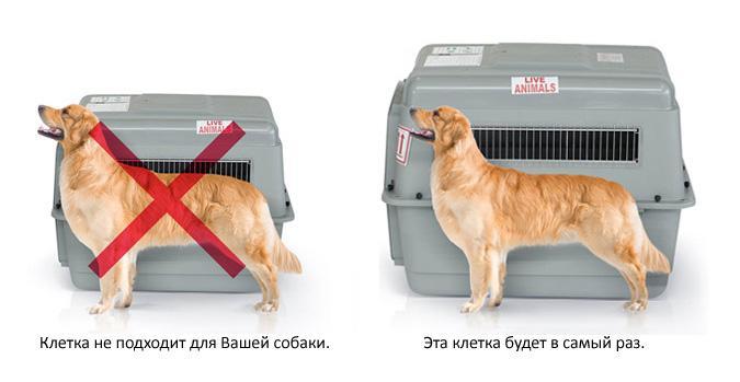Каких собак можно, а каких нельзя перевозить в самолетах?