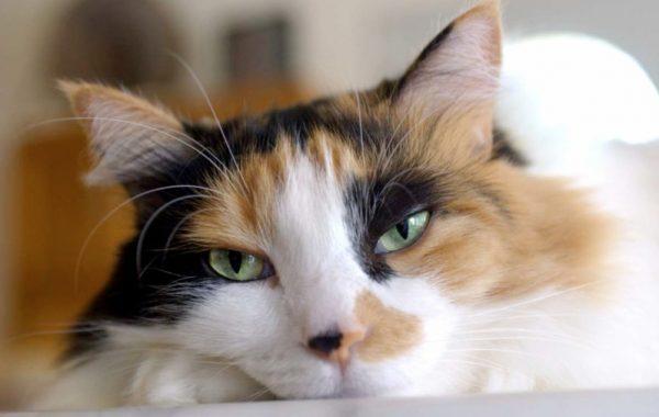Каким должен быть нос у здорового кота?