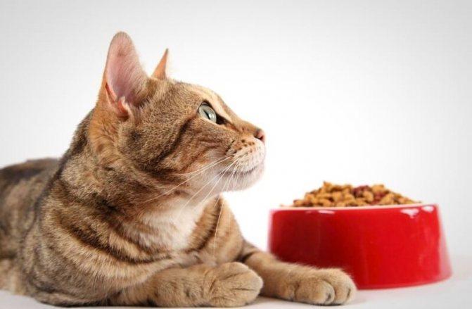 каким кормом кормить кота