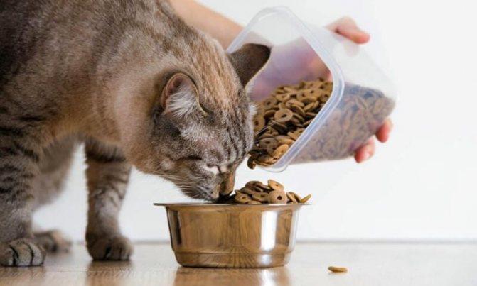 каким кормом лучше кормить кошку