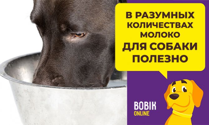 Какое молоко лучше давать щенку или взрослой собаке