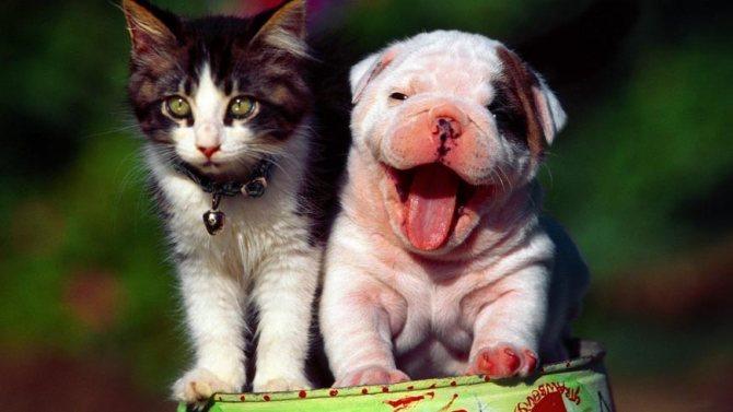 Какое животное лучше кошка или собака