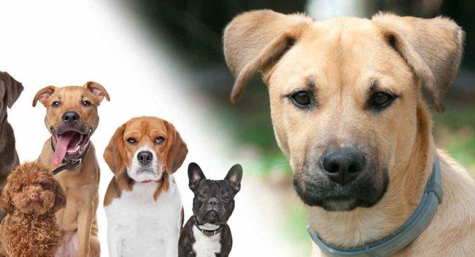 Какого по характеру выбрать щенка