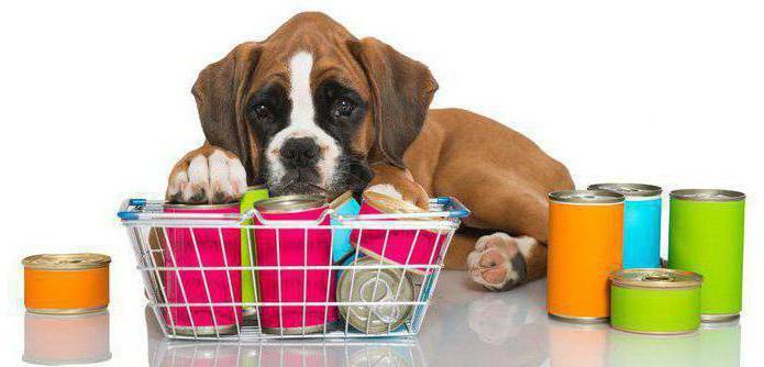 какой корм для крупных собак самый лучший