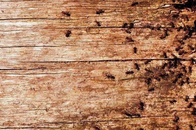 Каково значение муравьев в природе и жизни человека