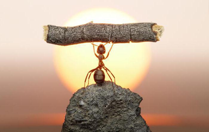 Какую пользу приносят муравьи