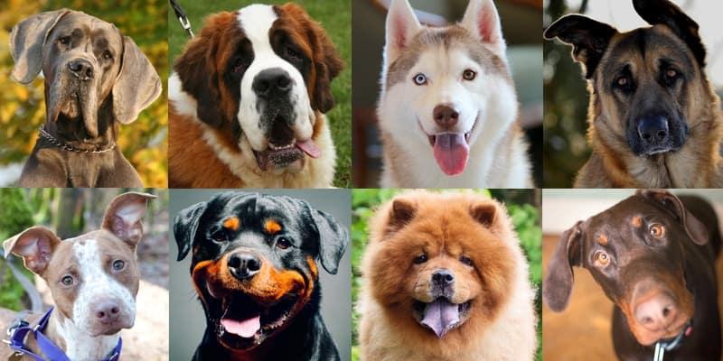 какую породу щенка выбрать