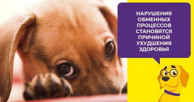 Кальций в рационе собаки - как рассчитать и обеспечить суточную норму