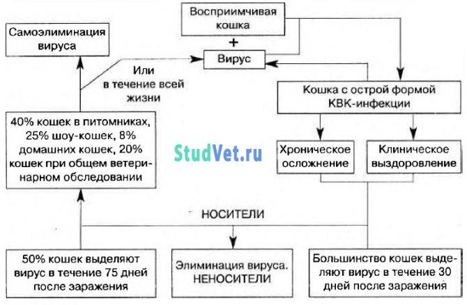 Калицивирусная инфекция кошек (эпизоотология)