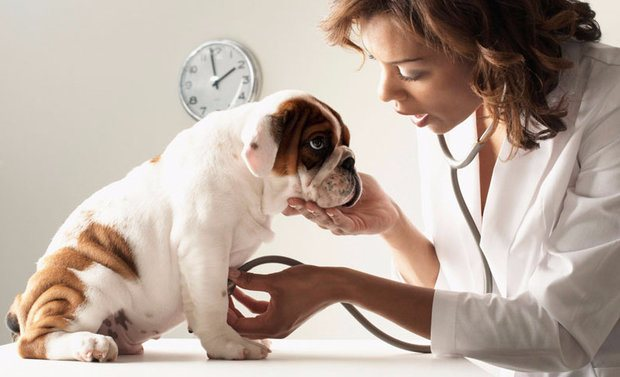 Каниквантел для собак инструкция, применение, отзывы