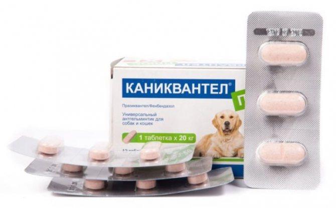 Каниквантел для собак