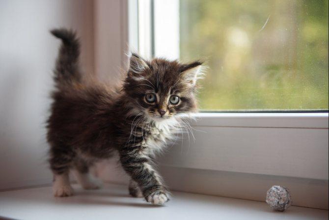 Кантарен для кошек - инструкция по применению, дозировка, способ применения