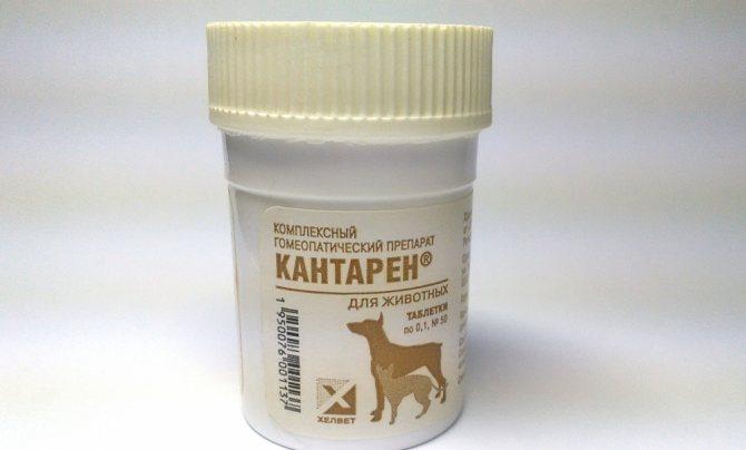 Кантарен инструкция по применению для собак. Кантарен - инструкция по применению для кошек, показания, дозировка. Применение раствора для инъекций