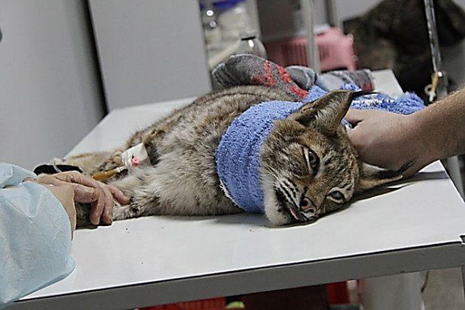 Капельница для кошки