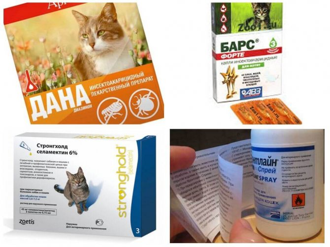 Капли на холку от глистов для кошек и котов: как правильно наносить, лучшие средства, дозировка
