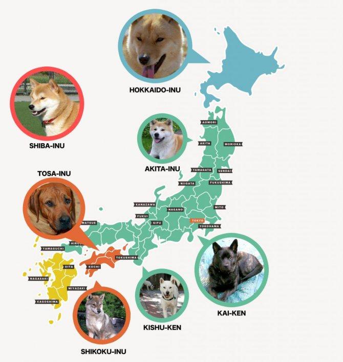 Карта японских пород собак