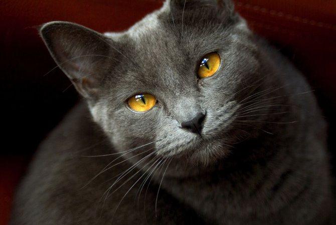 Картезианская кошка.jpg