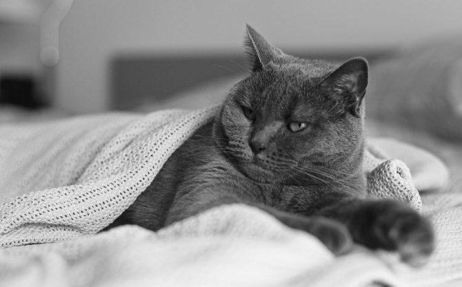 Картезианский кот фото.jpg