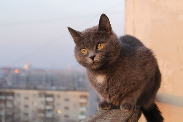 Картинки по запросу фото кошка и высота