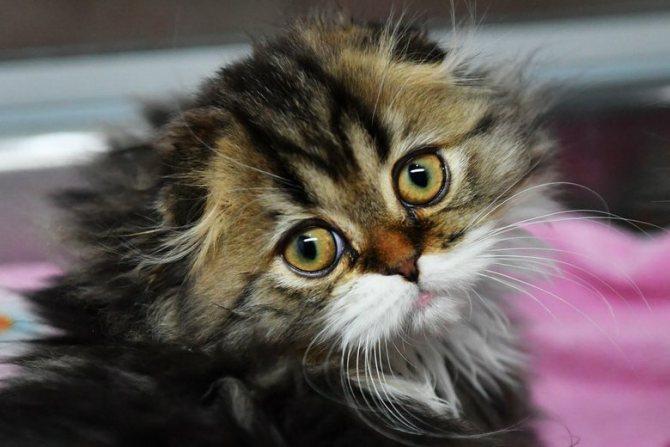 Картинки по запросу Как кошки воспринимают людей?
