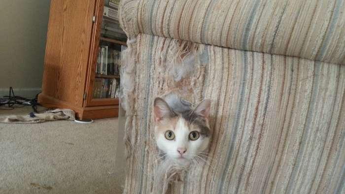 Картинки по запросу разодранные кошками вещи