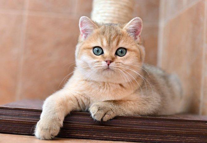 кератит у кошек симптомы.jpg