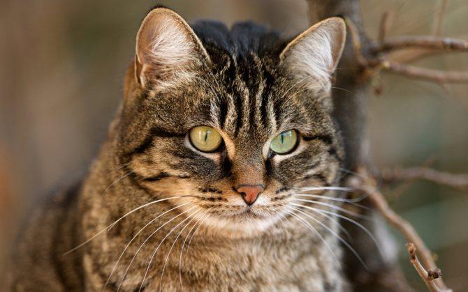 кератит у кошки.jpg
