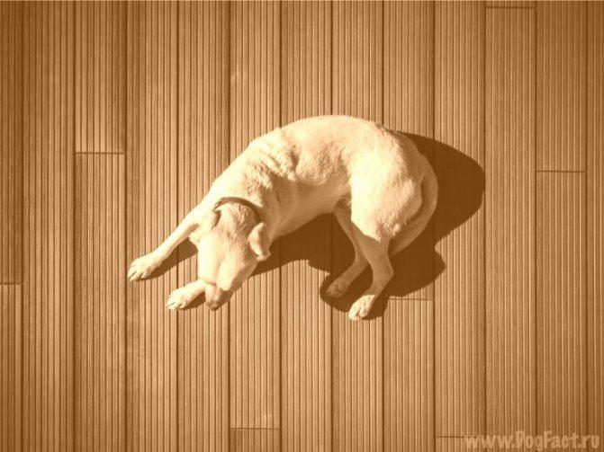 Классификация пород собак