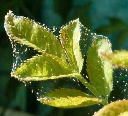 клещ на растение