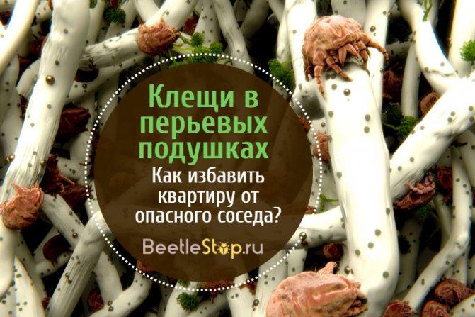 Клещи в перьевых подушках