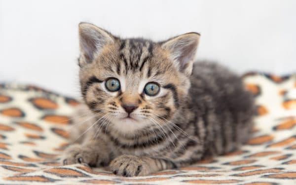 Клички для полосатого котенка