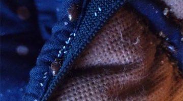 Живут ли клопы в одежде, как они переносятся